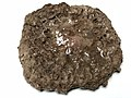 2020-06-03 02 46 31 A cooked Kirkland one-quarter pound ground beef patty in the Dulles section of Sterling, Loudoun County, Virginia.jpg