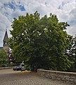 2020-07-18 Linde an der Wewelsburg, NRW 02.jpg