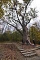 71-254-5023 Zalizniak Oak DSC 8056.jpg