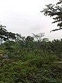 9 Chome-7 Akasaka, Minato-ku, Tōkyō-to 107-0052, Japan - panoramio - hello-go (2).jpg