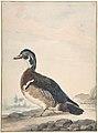 A Duck MET DP800684.jpg