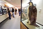 A Stuffed Emporer Penguin and her Chick Stand in a Display Case as Secretary Kerry Tours Crary Labs at McMurdo Station (30812064402).jpg