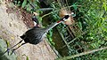 A bird at sunway lagoon wild park.jpg