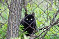 A cat in Ubezhenskaya-2014-04-13-1.jpg