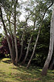 A group of trees with shrubs Gibberd Garden Essex England.JPG