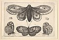 A moth, three butterflies and two beetles MET DP823957.jpg