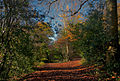 A walk among leaves, Reigate (8221932074).jpg