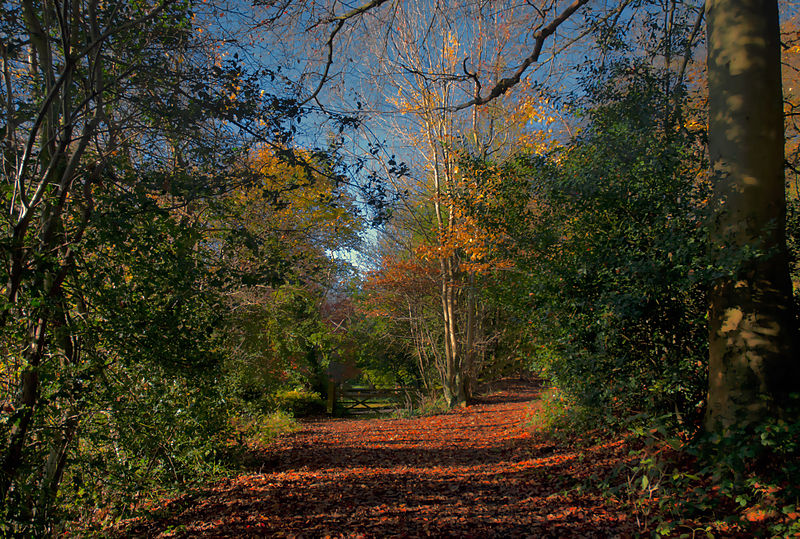 A walk among leaves, Reigate (8221932074).jpg