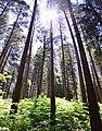 A walk in Yosemite (39042718515).jpg