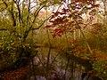 Abrams Creek, October 2013--Warren Bielenberg (39422681854).jpg
