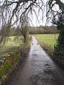 Access road to 'The Grange' - Northington - geograph.org.uk - 1728500.jpg