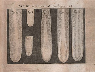Robert Hooke - Illustration from The posthumous works of Robert Hooke... published in Acta Eruditorum, 1707