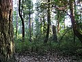 Activists saved this Cunningham woods. READ INFO IN PANORAMIO-COMMENTS - panoramio.jpg