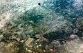 Aerial view to Lida, Belarus. August 28, 2019.jpg