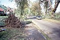 """Aftermath of the 1987 """"Great Storm"""" - geograph.org.uk - 283722.jpg"""