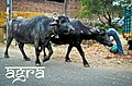Agra (5580944627).jpg