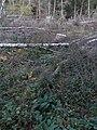 Aitzenbach offiziell auf Windbruchfläche.jpg