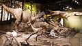 Albertosaurus Tyrrell.jpg