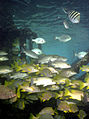 Alligator Reef.jpg