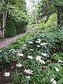 Aménagement paysager à la Villa Estevan, aux Jardins de Métis, Grand-Métis, Québec - panoramio (11).jpg