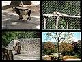 Ambientes y fauna de Zoologico de Caricuao, Caracas - Venezuela 2.jpg