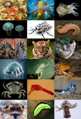 Przedstawiciele królestwa zwierząt