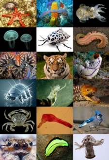 Zoologia wikipedia le encyclopedia libere for Garde meuble definition