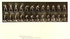 Animal locomotion. Plate 376 (Boston Public Library).jpg