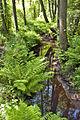 Anlooerdiepje - Nationaal Park Drentsche Aa.jpg