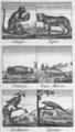Anonyme - L'Abécédaire du petit naturaliste, 1812 - p 049.png
