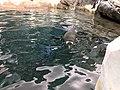 Antarctica- Empire of the Penguins (37113892592).jpg