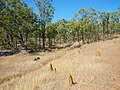 Anthills viewed from the Savannahlander - panoramio (1).jpg