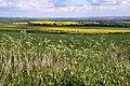 Arable field on Bury Down - geograph.org.uk - 1316084.jpg
