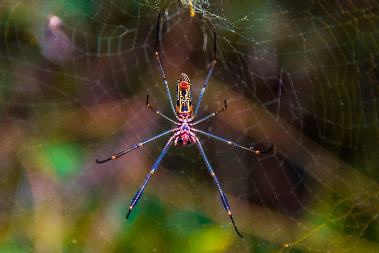 Resultado de imagem para teia de aranha aranha preta e amarela