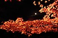 Arashiyama Hanatōro, Nison-in 嵐山花灯路・二尊院 紅葉と月DSCF5362.JPG