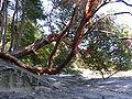 Arbutus sandstone.JPG