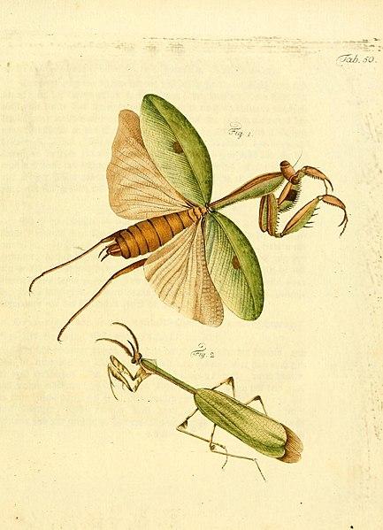 File:Archiv der Insectengeschichte (Tab. 50) (7415725142).jpg