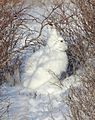 Arctic Hare (6379763779).jpg