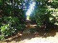 Aride Island path.jpg
