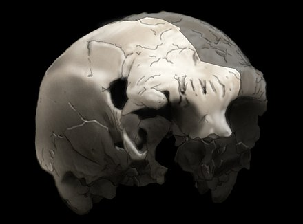 Aroeira 3 skull of 400,000 year old Homo heidelbergensis.The oldest trace of human history in Portugal.