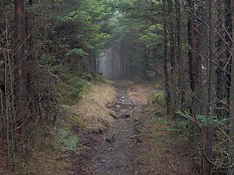 Mount Guyot (Great Smoky Mountains) - The dense forest of the Eastern Smokies renders the Appalachian Trail a virtual tunnel as it crosses the western slope of Mt. Guyot