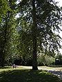 Auburn, Washington - Isaac Evans Park 01.jpg