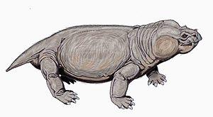1898 in paleontology - Aulacocephalodon