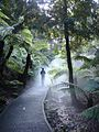 Australian National Botanic Gardens rainforest mist walk 01.jpg