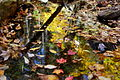 Autumn-leaves-floating - West Virginia - ForestWander.jpg