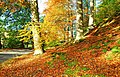 Autumn at Minnowburn, 2008 (6) - geograph.org.uk - 1028354.jpg
