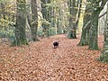 Autumn in Grovely Woods - geograph.org.uk - 619537.jpg