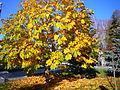 Autumn is closer-2.jpg