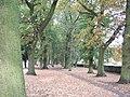 Autumn leaves in Gaywood, near Kings Lynn - geograph.org.uk - 1561114.jpg
