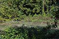 Auwald-Altbestandrest bei Ebersdorf 05 2015-08 NDM ME-064.jpg